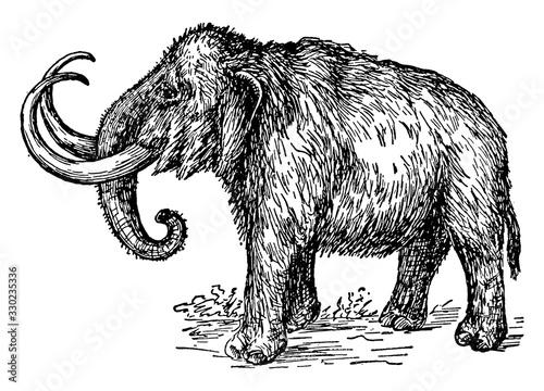 Mammoth/Mammuthus/ Elephantidae, vintage illustration. Canvas Print