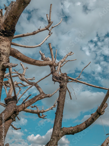 blue sky tree with no leave