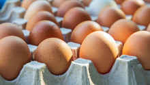 Side View Of Brown Chicken Eggs In An Open Egg Carton With Sunlight