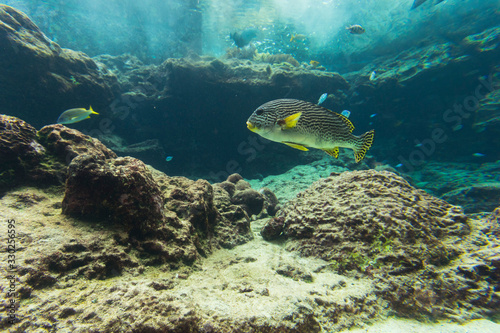 Coral reef aquarium tank for background. Amazing colorful saltwater aquarium. #330256595
