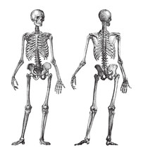 Human Skeleton Front And Back ...