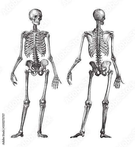 Photo Human skeleton front and back view / vintage illustration from Brockhaus Konvers