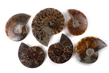 Ammonites And Ammonite Halves