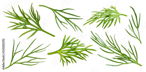 Canvas Print Dill isolated on white background with clipping path