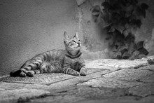 A Beautiful Black And White Ph...