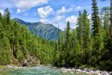 Boreal Forest And Shallow Moun...