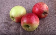 Apples On Bagging