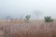 Frosted Autumn Tall Grass Prai...