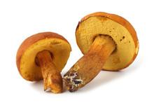 Boletus Ferrugineus (Xerocomus Spadiceus) Mushroom. Delicacy