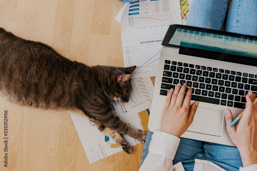 Fototapeta creative home work space - work from home concept - girl with cat