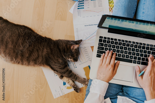 Fototapeta creative home work space - work from home concept - girl with cat obraz
