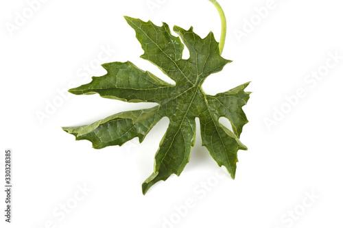 Photo Bitter melon leaves (bitter squash, bitter apple, momordica) leaf