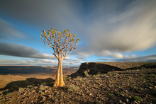 A Dramatic Sunset Landscape Taken On Top Of The Arid And Stark Fish River Canyon, Namibia, With An Ancient Quiver Tree Bathed In Golden Sunlight And Fast Moving Clouds In The Blue Sky.