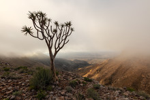 A Moody, Misty Landscape Taken On Top Of The Arid And Stark Fish River Canyon, Namibia, With An Ancient Quiver Tree In The Foreground, And The Golden Sun Breaking Through The Mist At Sunrise.
