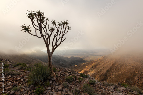 A moody, misty landscape taken on top of the arid and stark Fish River Canyon, Namibia, with an ancient Quiver Tree in the foreground, and the golden sun breaking through the mist at sunrise Fototapet