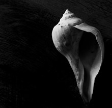 Shell Isolated Against A Dark ...