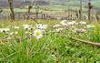 Frühlingsanfang im Weinberg