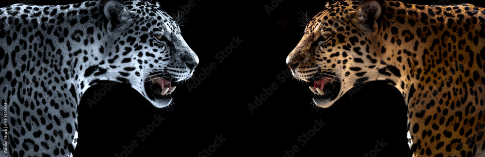 Fototapeta cheetah, leopard, jaguar