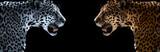 Fototapeta Zwierzęta - cheetah, leopard, jaguar