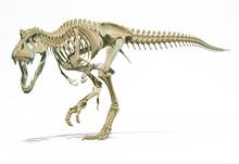 T-Rex Full Skeleton In Dynamic Pose. 3D Illustration.