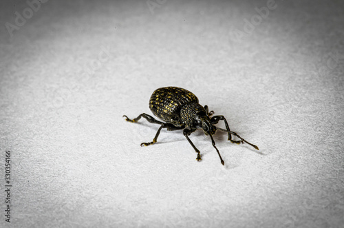 Photo Beetle Up Close In Home
