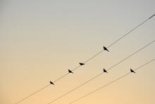 Black Silhouettes Of Doves Ali...