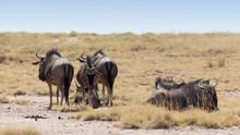 A Small Group Of Buffalo