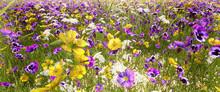 Die Blumenwiese Zeigt Ihre Sch...