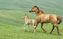 Horse With Its Foal