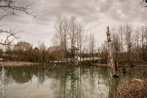 Little swampland with stagnant water and broken trees Wallpaper Mural