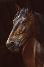 Portrait Of A Horse Equine
