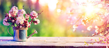Pink Blossoms In Watering Can At Sunrise - Spring Background