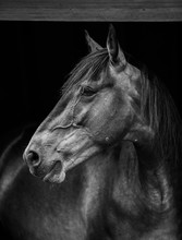 Portrait Of A Horse Wall Art E...