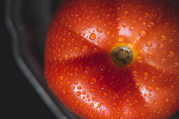 Fresh red organic tomato with water drops