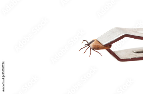 Photo health danger disease carrier ticks