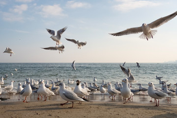 Seagulls and pigeons on the seashore on the beach on a sunny spring day.