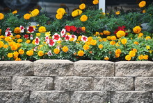 Flowers By Wall