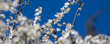 Blooming Tree. Butterfly. Sphi...