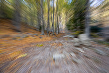 Dynamic Picture In A Autumn Fo...