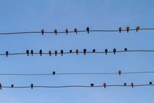 Flock Of Birds Sitting Accross...