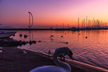 White Swan Next To A Harbor Wi...
