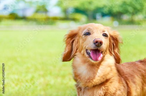 笑顔の犬 - 330412769