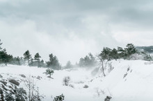 Foggy Snow Ravine.  Frozen Lan...
