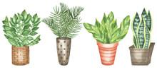 Flower In Pots