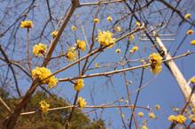Yellow Spring Flower