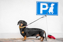 Dog Leashed At Designated Dog ...