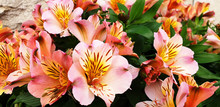 Bouquet Of Orange And Pink Flo...