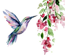 Flying Hummingbird, Watercolor Illustration, Tropical Bird And Flower Isolated On White Background, Exotic, Wild Life Clip Art. Hand Painting.