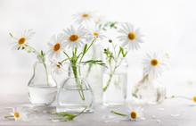 Beautiful Daisy Flowers In Gla...