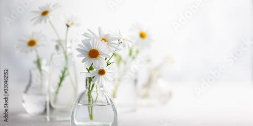 Fotografia Beautiful daisy flowers in glass vases on light background